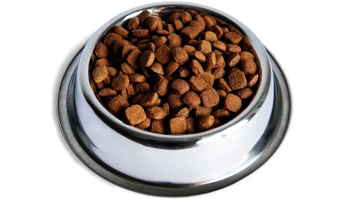 divinus-pet-food-bowl
