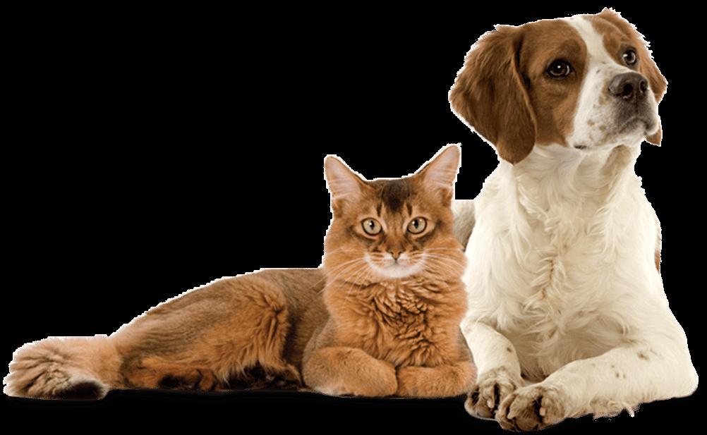 Divinus cat dog food